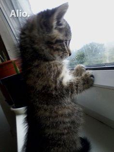 Katė — Alio.lt