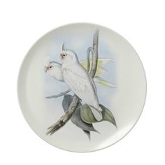 Vintage Decorative Plate  Just beautiful. This stunning vintage illustration of a pair of Blood Stained Cockatoos would look amazin...