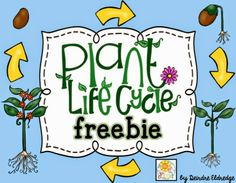loads of free plant activities
