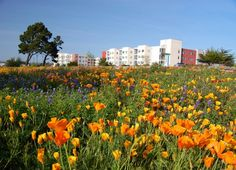 CSUMB, seriously considering this place, CSU Monterey Bay
