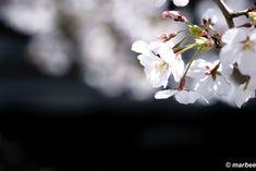 写真 染井吉野 202102 今週末が見時です #写真 #photo #花 #flower My Works, Plants, Plant, Planets