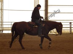 training, reining, quarterhorse Training, Horses, Pictures, Photography, Animals, Animais, Fotografie, Animales, Photos