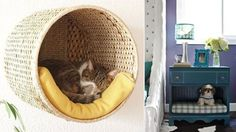 Höstpyssel - Vi i Villa Bra Hacks, Dog Furniture, Hanging Chair, Home Organization, Animals And Pets, Bean Bag Chair, Manga, Cats, Home Decor