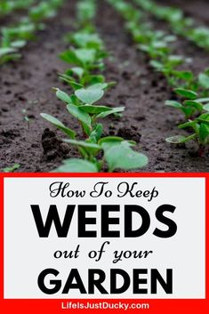 garden care vegetable 19 of the BEST Ways to get rid of weeds in your vegetable garden. Learn how to stop weeds from growing and prevent them with mulch and other Natural, Organic, Easy weed control tips. Organic Vegetables, Growing Vegetables, Organic Nutrients, Organic Herbs, Organic Weed Control, Organic Gardening Tips, Vegetable Gardening, Container Gardening, Organic Farming