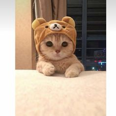 cat wallpaper cute Aw cuute Folgen Sie FinestFam a - cat Cute Little Animals, Cute Funny Animals, Cute Dogs, Funny Cats, Cats Humor, Funny Animal Faces, Funny Horses, Cute Cats And Kittens, Kittens Cutest