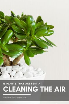 Get a better night's sleep with cleaner air! Place one of these plants beside your bed and enjoy fewer headaches and less sickness! Check it out! #airpurifier #bedsideplant Clean Air Plants | Clean Air Plants Houseplant | NASA Clean Air Plants | Indoor Clean Air Plants | Best Clean Air Plants | Indoor Plants Clean Air Houseplant | Indoor Plants Clean Air | Indoor Plants Clean Air Bedrooms | Small Indoor Plants Clean Air | #airpurifierplant #cleanair Indoor Plants Clean Air, Small Indoor Plants, Air Cleaning Plants, Little Plants, House Plants Decor, Plant Decor, Palm Tree Uses, Air Filtering Plants, Apartment Plants