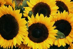 I love most flowers, but I really think sunflowers are my favorite (and orange tulips!)