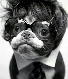 When I get my Frenchie, I shall dress him up, and he will look like a 70's anchor man! Limited Edition French Bulldog Tee