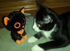 Black cats get a bad rap even on Halloween! Read more and adopt a black cat!