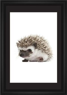 Baby Hedgehog Framed Print, Black, Classic, Cream, Black, Single piece, 20 x 30 inches