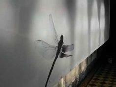 Fly Ways - Stefaan van Biesen Art Borgloon 2012.
