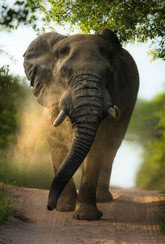 Best wildlife photos of 2013 All About Elephants, Elephants Never Forget, Large Animals, Animals And Pets, Cute Animals, Wild Animals, African Animals, African Elephant, Beautiful Creatures