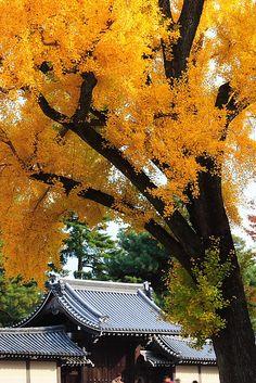 Kyoto-Gosho-06 KYOTO JAPAN