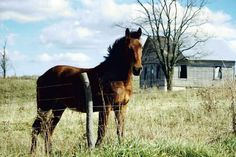 I had a horse named Domino when I was younger.