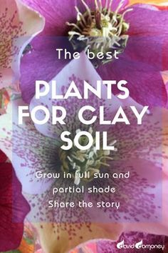 Clay soils bring many gardeners out in a cold sweat. They have a reputation as back-breaking and impossible to work with. But the truth is that clay soils can be truly brilliant in a garden. Clay Soil Plants, Planting In Clay, Planting Flowers, Landscaping Around Trees, Landscaping Plants, Garden Plants, Shade Plants, Cool Plants, Shade Perennials