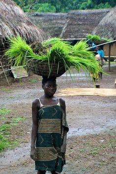 SIERRA LEONE! Visit local villages in Sierra Leone! Photo by CIFOR! #SierraLeone