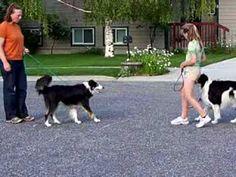 sidewalk passing /meet & greet practice - dog training - YouTube
