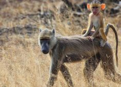 Selous Game Reserve (By Road) 3 nights 4 days Africa safari