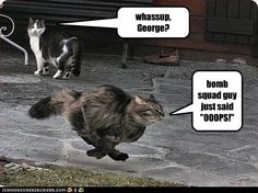 LOLcats is the best place to find and submit funny cat memes and other silly cat materials to share with the world. We find the funny cats that make you LOL so that you don't have to. Cops Humor, Police Humor, Military Humor, Police Quotes, Funny Police, Army Humor, Military Quotes, Police Wife, I Love Cats