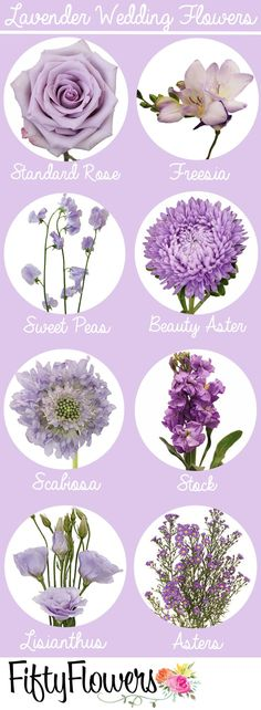 Beautiful Purple Flowers (Care & Growing Tips) Purple flowers are a great way to add interest to your yard or landscape. See some of our favorite purple garden flowers! Spring Wedding Colors, Purple Wedding Flowers, Wedding Flower Decorations, Lavender Flowers, Floral Wedding, Trendy Wedding, Flowers Decoration, Lavender Wedding Theme, Wedding Favors