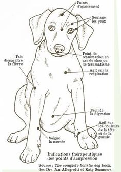 Practice acupressure for your dog - suinoel - - Pratiquer l'acupression pour son chien To practice acupressure for his dog – Osteopathy and acupressure for dogs – Wamiz Animals And Pets, Cute Animals, Merle Australian Shepherd, Massage, Amor Animal, Baby Dogs, Dog Care, Dog Mom, I Love Dogs