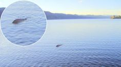 Legend has it that the Loch Ness Monster was first sighted in the sixth century years ago by an Irish monk while preaching by the lake. Now, a Scottish sailor who has spent the last 26 years of his life searching for the elusive creature,. Loch Ness Monster Sightings, Monster Pictures, The Loch, Weird News, Mystery Of History, Cryptozoology, Weird Creatures, Sea Monsters, Wild Nature