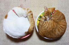 yes and yes: Fact: Japanese Cats Exponentially More Awesome Than All Other Cats