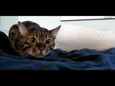 Funny cat videos - Fails Funny Vines Videos Cats #11 - http://positivelifemagazine.com/funny-cat-videos-fails-funny-vines-videos-cats-11/