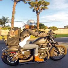 Harley Davidson Iron 883 with custom pipes, related front signals, a sissy bar and a dog carrier. I HATE the bubble screen she is wearing though.