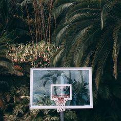Brandon Osorio Still-Life Print: Courtside Vive Le Sport, Wow Art, Design Inspiration, Prints, Instagram Posts, Painting, Basketball Hoop, Basketball Tumblr, Basketball Equipment