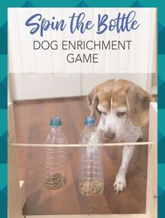 Dig into the recycling bin for empty plastic bottles to make a fun dog activity for your favorite pet! Get the tutorial for this DIY dog enrichment game, plus learn how to craft dog name tags and an easy rope toy for your dog made from upcycled leggings! Diy Pet, Dog Enrichment, Empty Plastic Bottles, Dog Name Tags, Pet Id Tags, Dog Games, Dog Crafts, Kids Crafts, Dog Activities