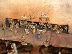 electroculture abeilles - Electroculture : Énergies naturelles au Service de l'Agriculture Agriculture, Bee Keeping, Service, Gardening, Activities, Bee Boxes, Honey, Bees, Animaux