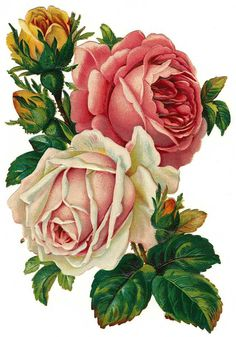 Pastel cluster of roses:    http://www.lilac-n-lavender.blogspot.com/2012/04/pastel-roses-french-ephemera.html