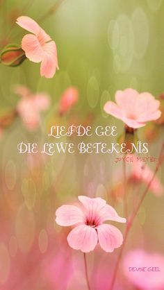 Follow vir nog afrikaanse woorde, liedjies, se goed en bybelversies =) Afrikaanse Quotes, Joyce Meyer, Meaning Of Love, My Land, Hope Love, Daily Affirmations, Something Beautiful, Cute Quotes, Things To Think About