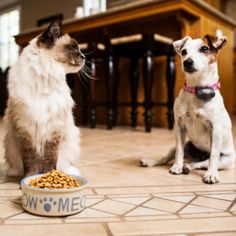 How Can I Choose the Best Food for My Pet? | PetSafe® Articles