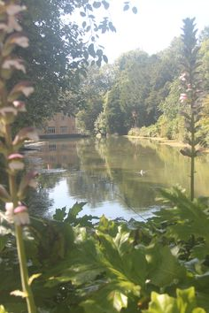 Lovely pond view in Cheddar 2015