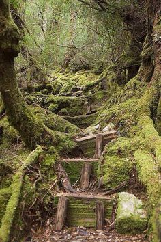 Moss Steps - Frenchmans Cap Track, Franklin-Gordon Wild Rivers NP Tasmania img by NomadTales