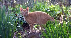Как уберечь грядки от кошек и их копаний в земле? | Летний досуг | Яндекс Дзен