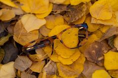 As the season's change, so should your style with Arnette eyewear. See our range in a Dynamic Vision store near you. Image: instagram.com/arnette #arnette #arnetteeyewear #fall #autumn #changingseasons #luxuryeyewear #dynamicvision #optometrists