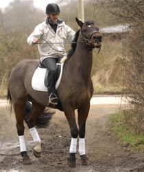 Everything is going swimmingly, until you ask your horse to step into water. Michael Peace shows you how convince your horse to dip his toes...