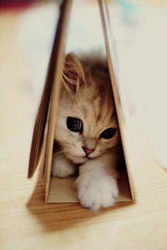 Awe what a cute kitten! Pinterest ---> KaufmannsPuppy
