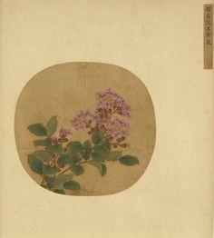 宋, 衛昇, 紫薇,  Crape Myrtle Sketched from Life,  Wei Sheng, Song dynasty (960-1279)