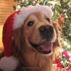 If I keep smiling like this, will Santa bring me extra presents? :)