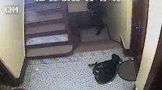 Polícia mata cão sem motivo aparente