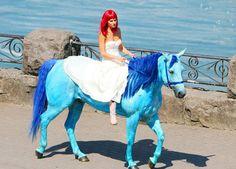 dyed horses - Buscar con Google
