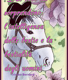 Immagini gratis per whatsapp-Free pictures for whatsapp. Video whatsapp. Video buonaDomenica