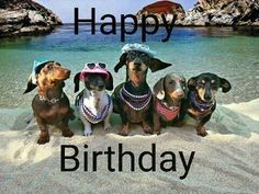 15 Ideas For Dogs Happy Birthday Friends Funny Happy Birthday Images, Happy Birthday Friend, Birthday Wishes Funny, Happy Birthday Messages, Happy Birthday Quotes, Happy Birthday Greetings, Humor Birthday, Happy Birthday Dachshund, Happy Birthday Animals
