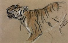 John Macallan Swan Head and Forepart of a Tiger, date not known Pastel on paper, 222 x 346 mm Collection Tate Woman Drawing, Cat Drawing, Animal Sketches, Animal Drawings, Illustrations, Illustration Art, Most Endangered Animals, Tiger Sketch, Easy Art Projects