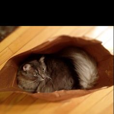 Puddy in a bag...