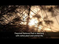 Experience pristine Freycinet National Park on Tasmania's East Coast. View Wineglass Bay, the Hazards and native wildlife. See accommodation options like Freycinet Lodge and Saffire Freycinet.
